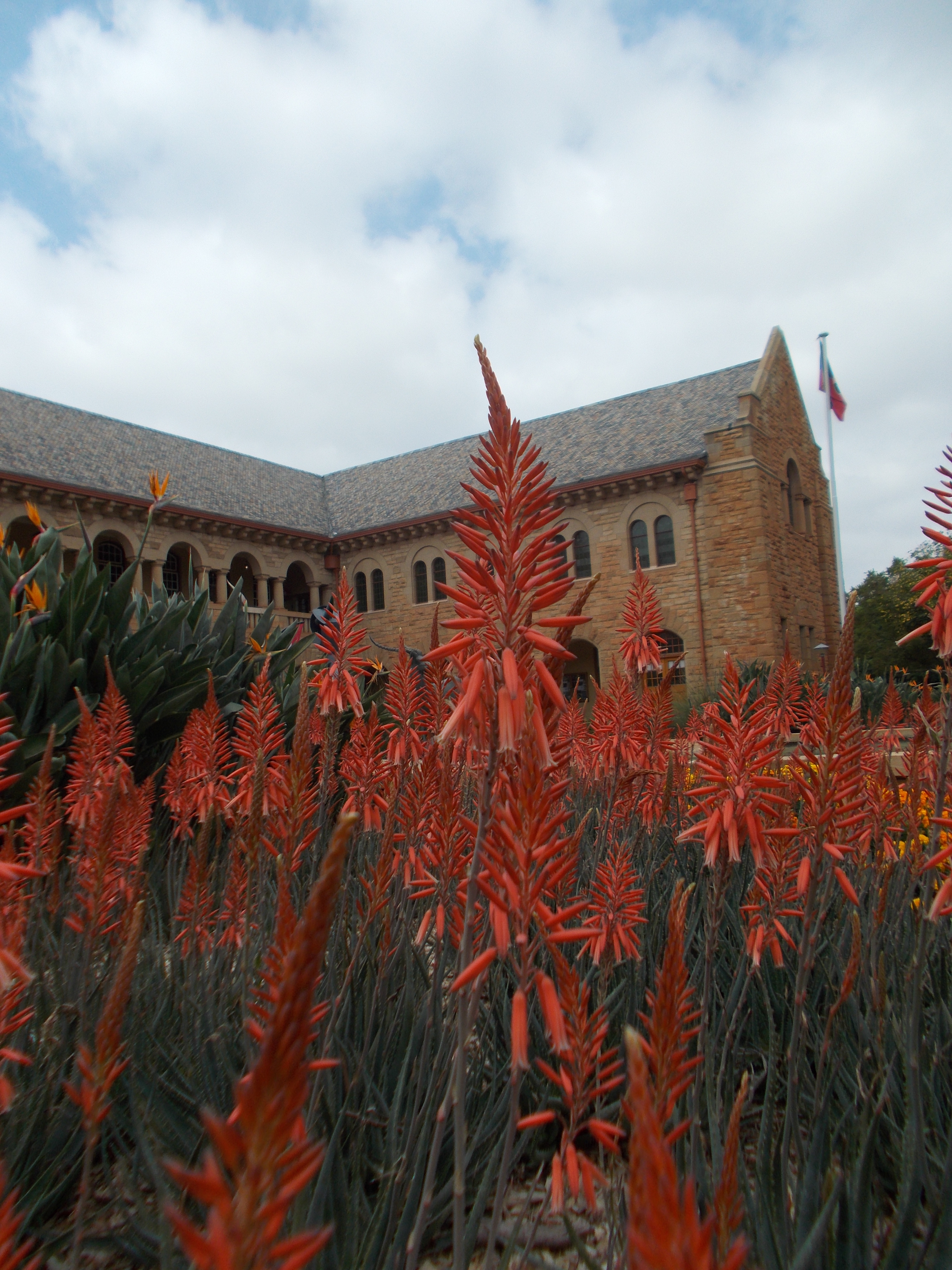 UP Aloes on the Campus
